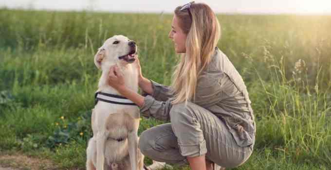 Dresser son chien : 5 méthodes positives qui vont vous aider