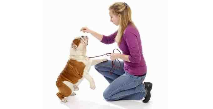 Éducation pour chien de quoi parle-t-on exactement ?
