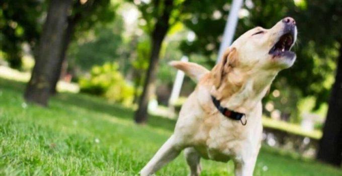 Mon chien aboie dans le jardin 3 événements qui risquent de vous surprendre