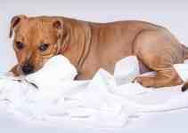 Comment rendre un chien propre a la maison 5 astuces