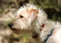 Obéissance canine, nos conseils pour apprendre à votre chien la propreté