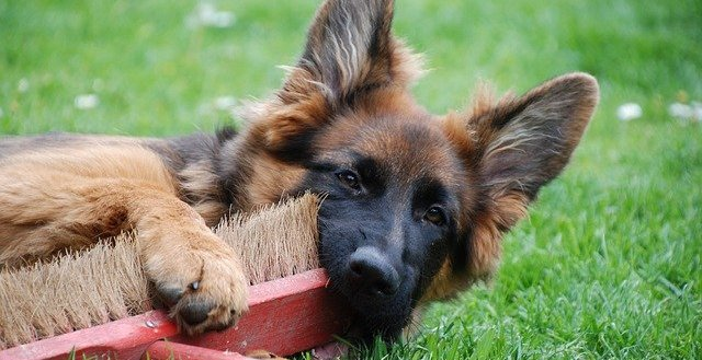 Les ordres de base pour dresser votre chien
