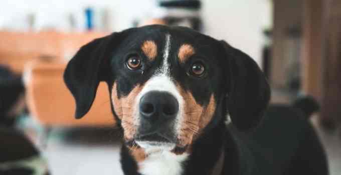 Apprendre à son chien à reconnaître son nom comment faire ?