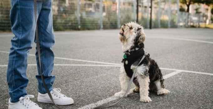 Comment apprendre le stop à son chien
