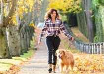 Guide pour apprendre à votre chien à vous suivre