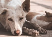 Comment dresser un chien pour la propreté