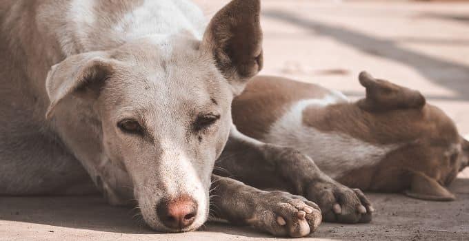Comment dresser un chien pour la propreté voici 6 conseils pour réussir à parfaitement le dresser.