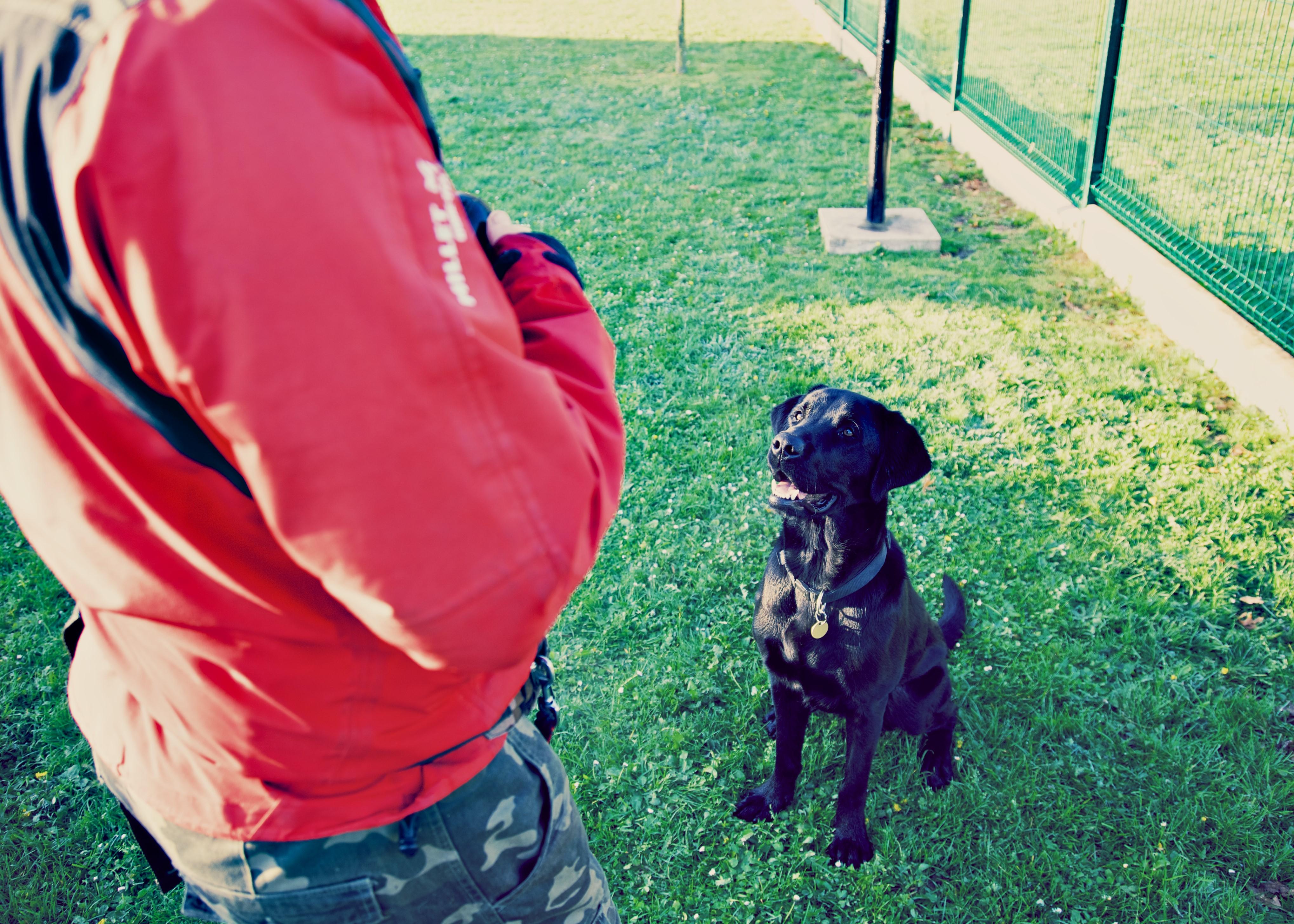 animalier éduquant un chien