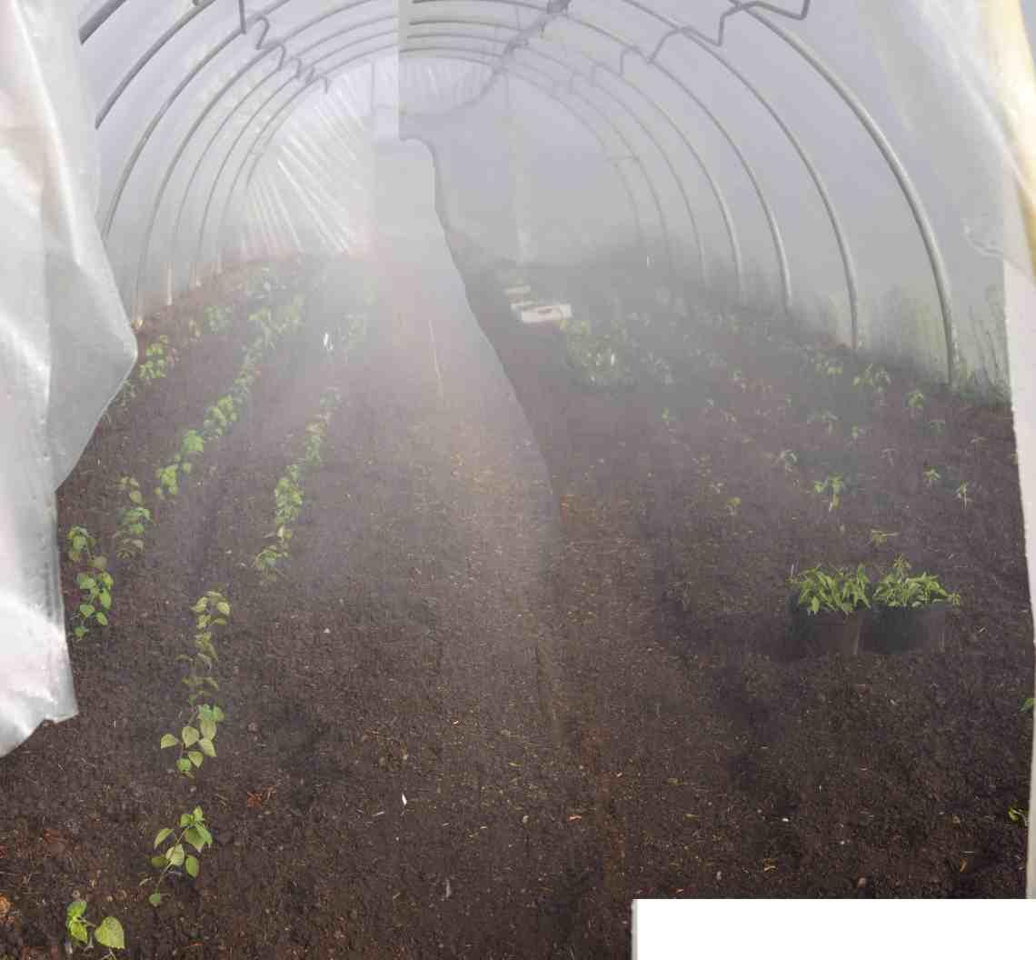 Folientunnel, bepflanzt