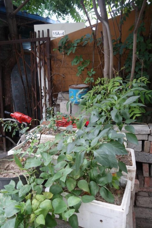 Beijing Hutong 'Agriculture'