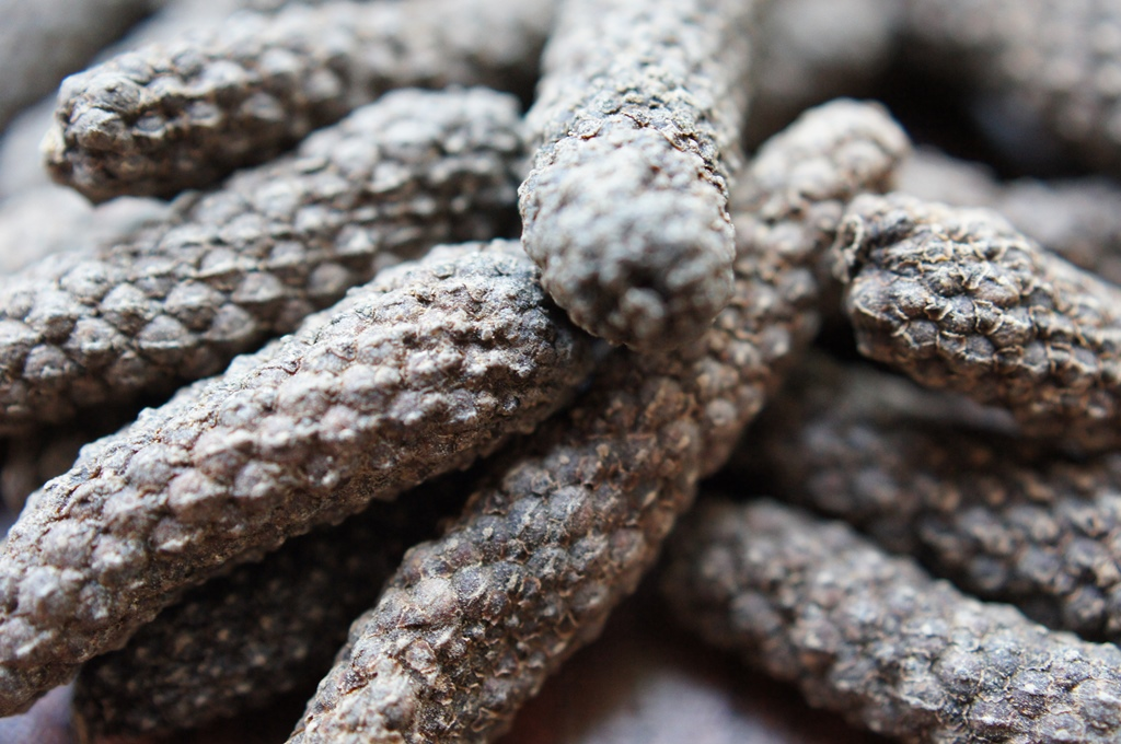 Long Pepper (Piper longum)