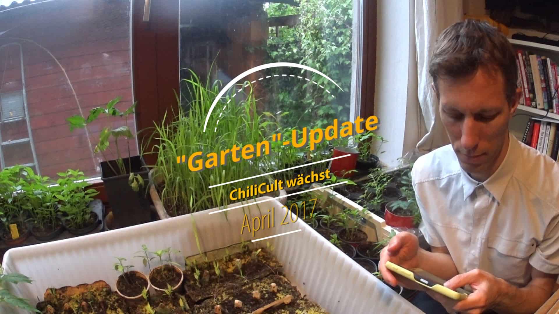 ChiliCult Garten Update - Es wächst, und es wird kalt