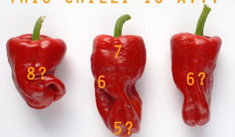What pungency, what part of a pepper?