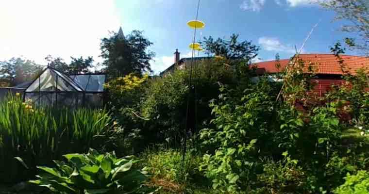 Garten-Update Mai 2017