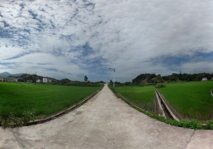 Rice Fields / Reisfelder