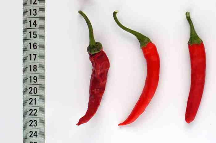 Bhutanese Chili Bangala