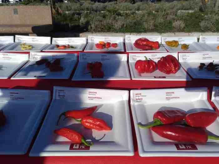 Minimaler Aussschnitt aus den 1133 Sorten in der Chilli-Weltrekordausstellung beim Viareggio Peperoncino Day 2019.