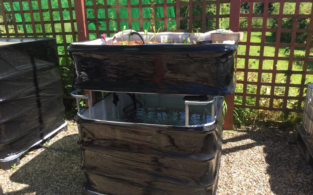 How To Build Your Own DIY Aquaponics System The Chilli