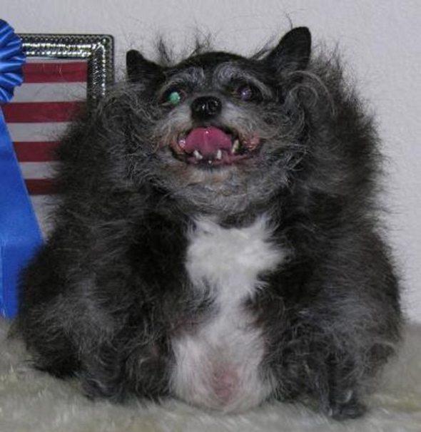 Ugliest Dog in the World Contest Winner