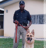 trained guard and protection dogs