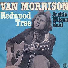 Van Morrison Redwood