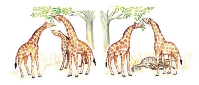 Risultati immagini per evoluzione
