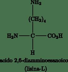 L-lisina, ottenibile sfruttando le biotecnologie