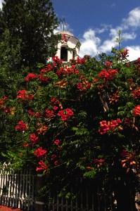 Flowers in a Church yard, Bulgaria