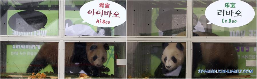 Pandas chinos reciben nuevos nombres al llegar a República de Corea