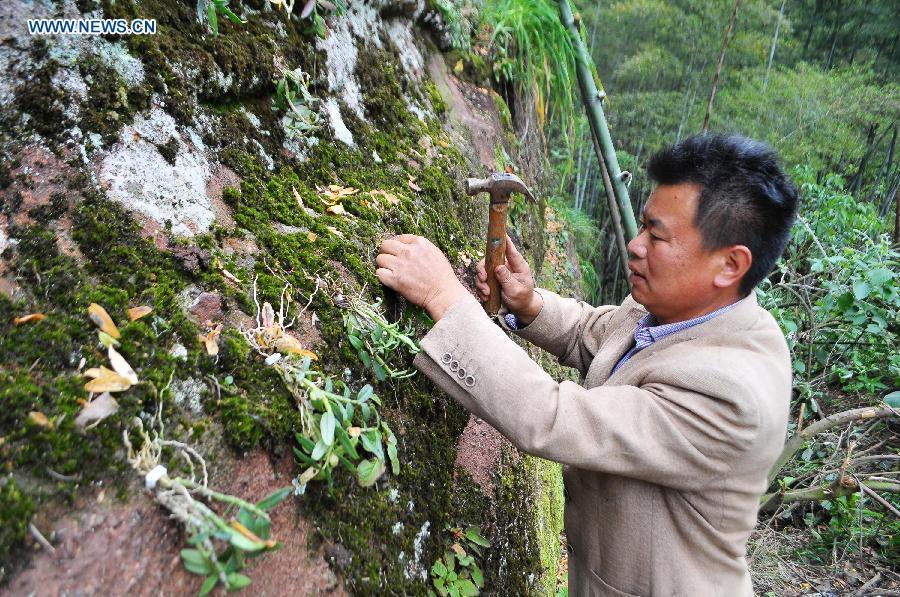 Enfoque de China: Cultivo de medicina tibetana a través de la innovación
