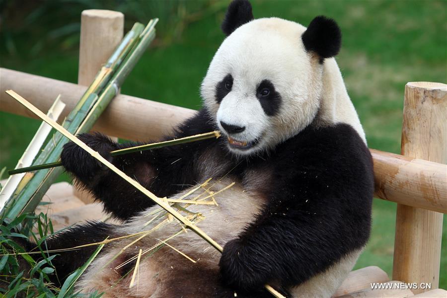 """""""Conversación"""" entre panda y humano se vuelve viral"""