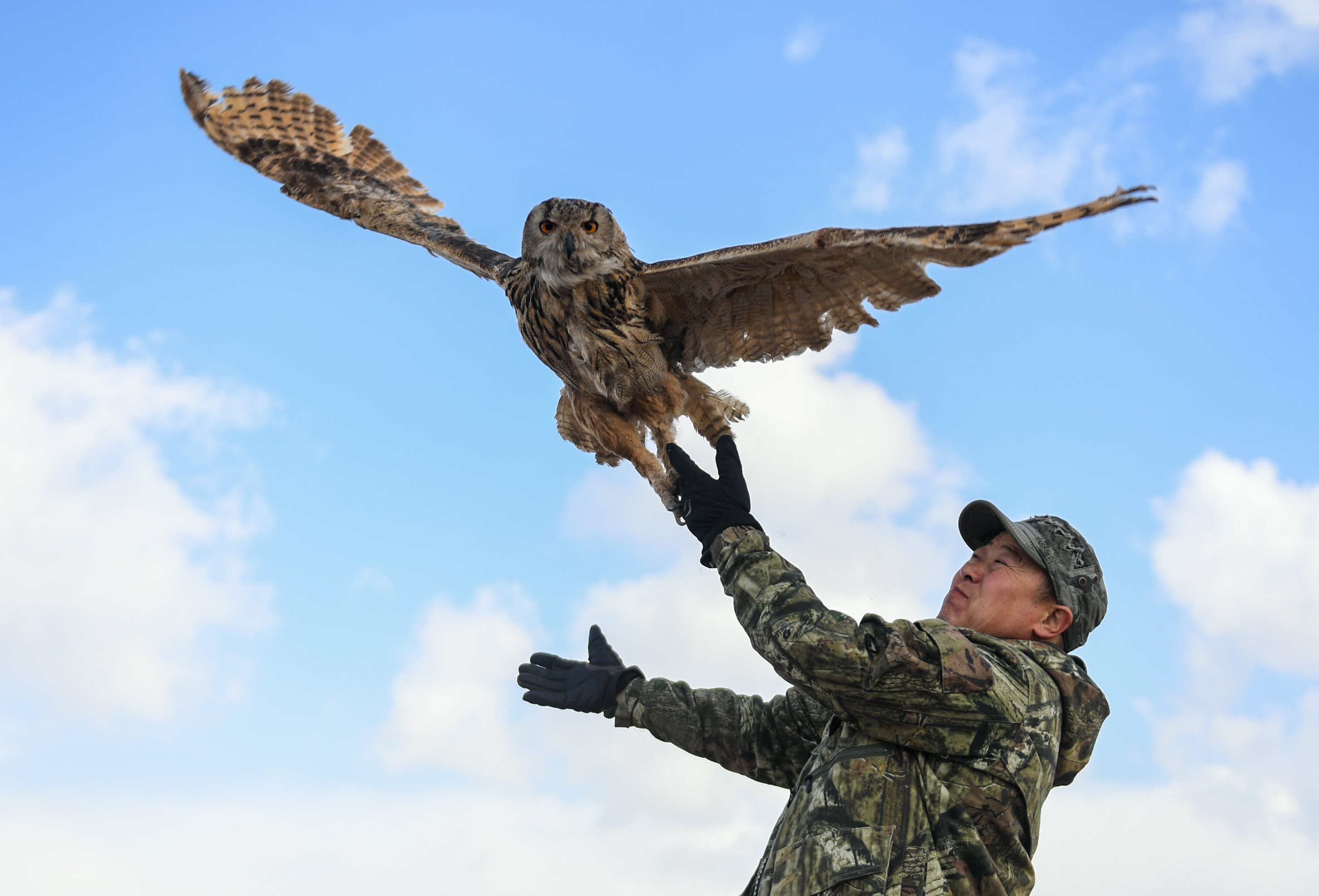 Liberan 53 aves silvestres rehabilitadas en su hábitat natural en China