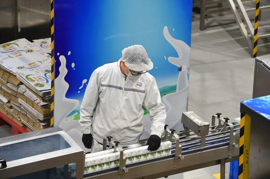 Empresas lácteas chinas recuperan producción para garantizar suministro