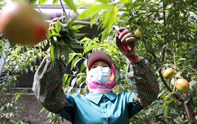 Informe destaca importancia de sector agrícola de China en medio de COVID-19