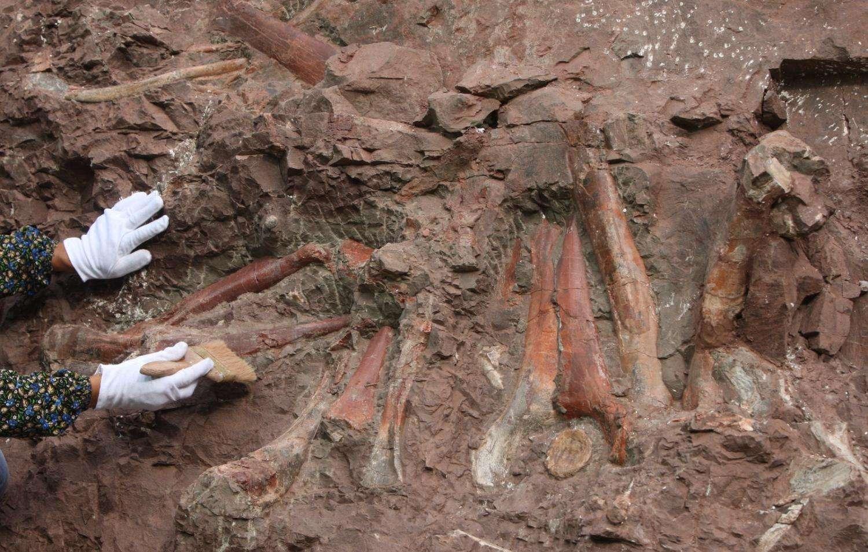 Descubren fósil de nueva especie de dinosaurio en este de China