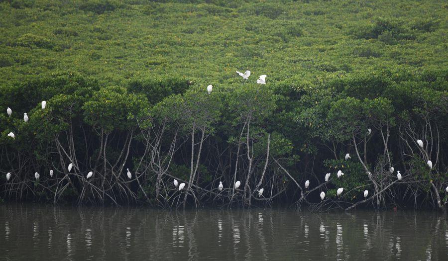China desarrollará y restaurará 18.800 hectáreas de manglares para 2025
