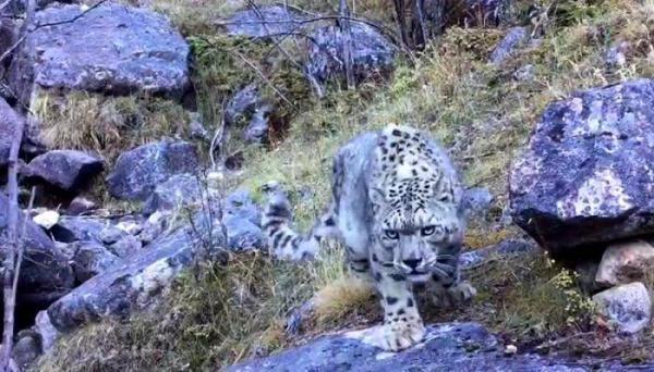 Avistan a raro leopardo en reserva natural de suroeste de China