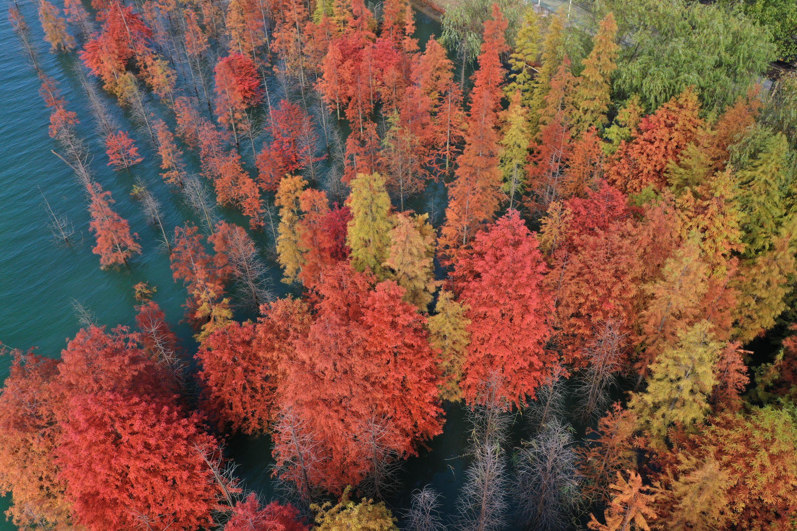 "China introducirá programa de ""jefe de bosques"" a nivel nacional"