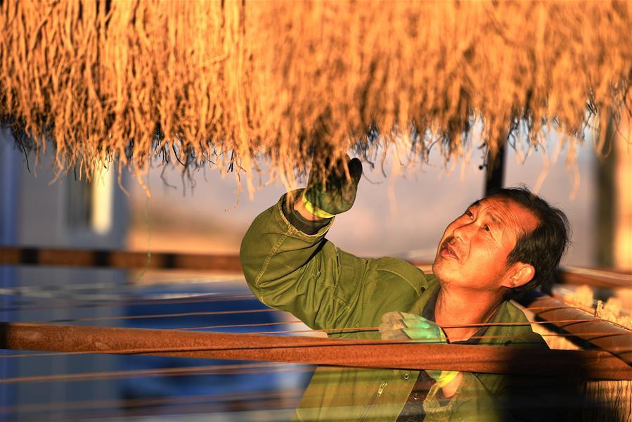 Provincia interior china de Gansu fortalece desarrollo de industria de medicina herbaria