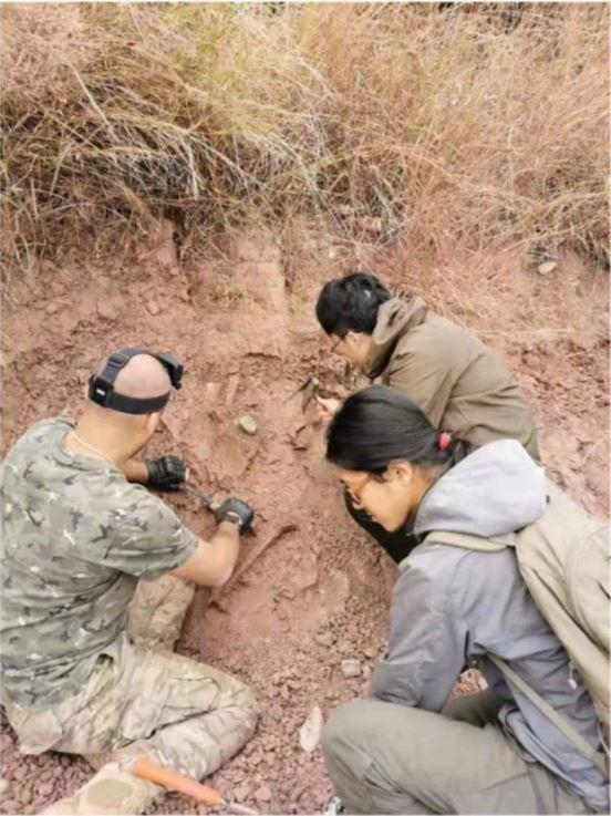 Hallan fósil de cría de dinosaurio de 200 millones de años de antigüedad en suroeste de China