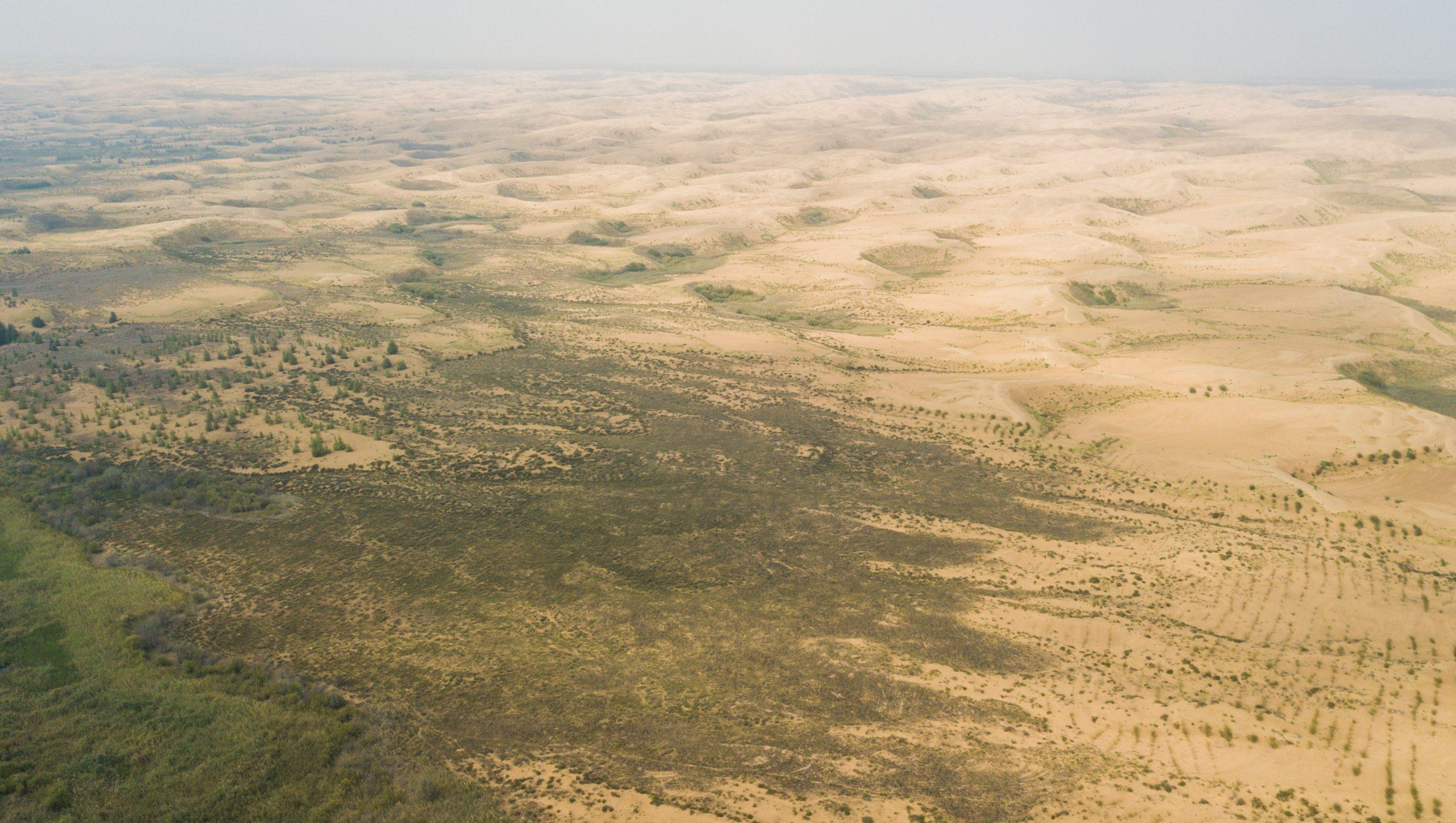 Región china de Mongolia Interior gana terreno en control de desertificación