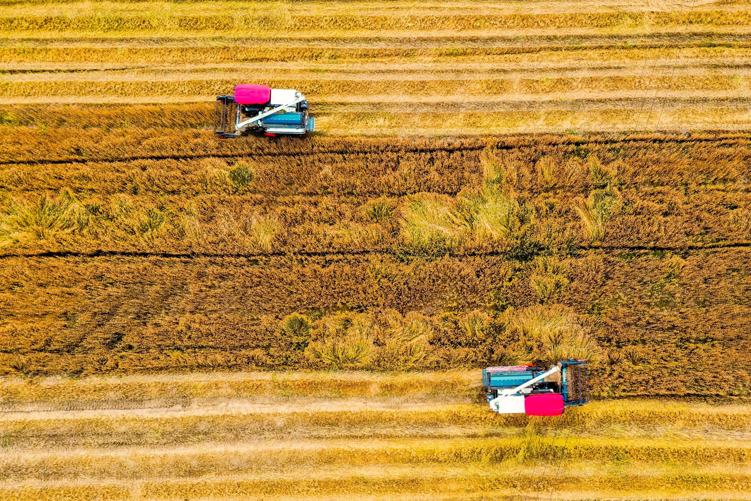 China aumenta suministro de semillas para ayudar a provincia afectada por inundaciones