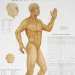 Poster Körperakupunktur 1