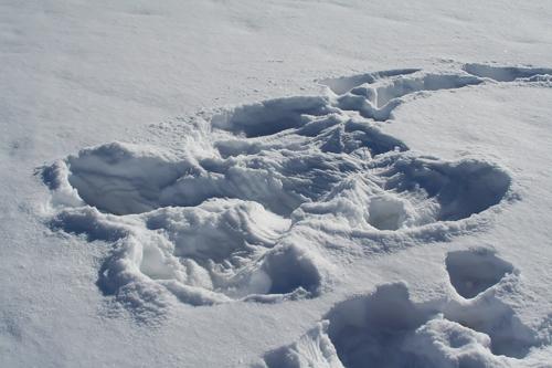 snowangelsm.JPG
