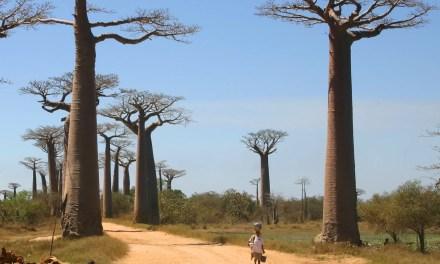 Nouvelle polémique à Antanimena – Morombe