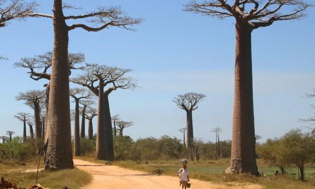 Hausse des importations chinoises à Madagascar