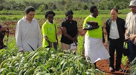 La Chine lutte contre l'insécurité alimentaire au Soudan du Sud