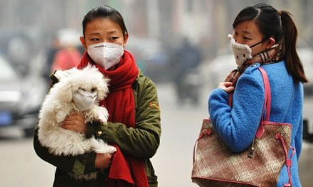 Taïwan : viande de chien et chat bientôt interdite