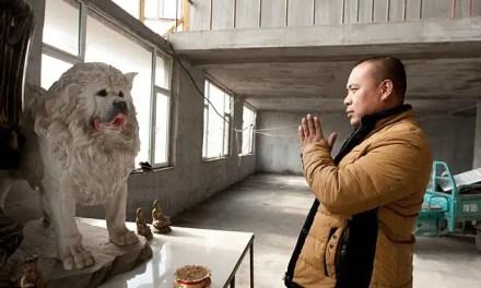 Taïwan : fin de l'euthanasie pour les chiens errants