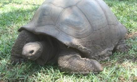 La divination par l'écaille de tortue